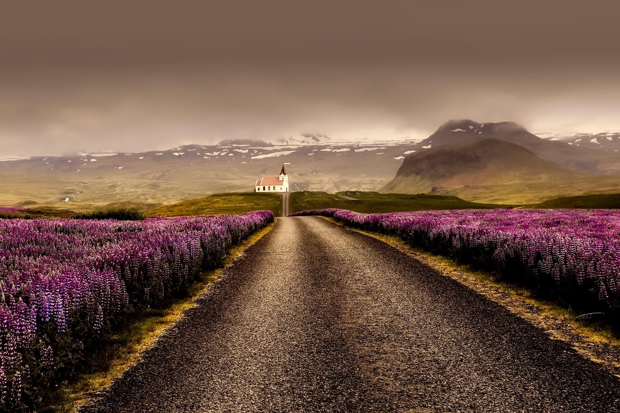 Lupinen: Blütenpracht in Island