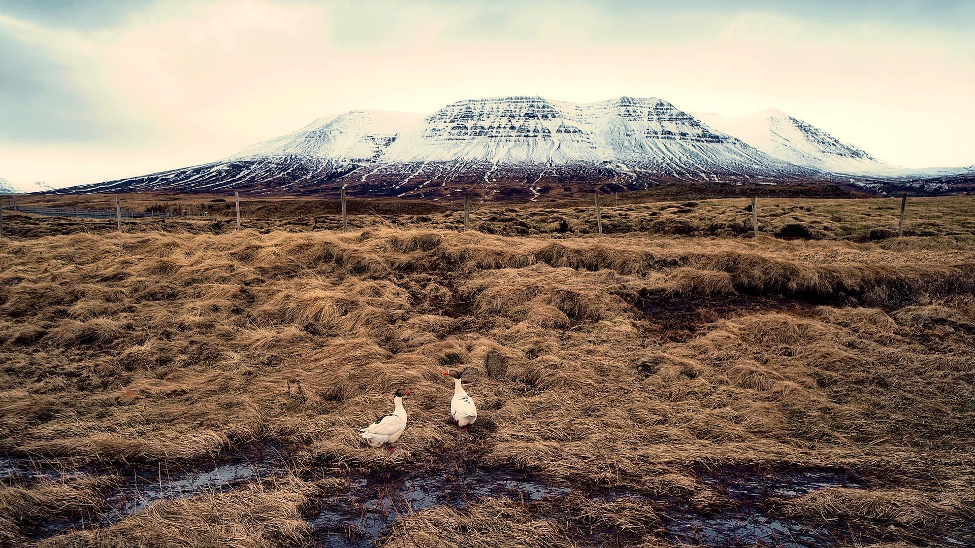 3 Dinge, die du in Island vermeiden solltest